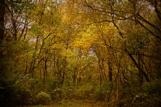Woodlot, Hunter Hill, Hagerstown, Maryland, October 22, 2013
