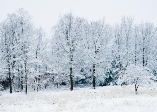 White Woods, Longmeadow, January 17, 2008