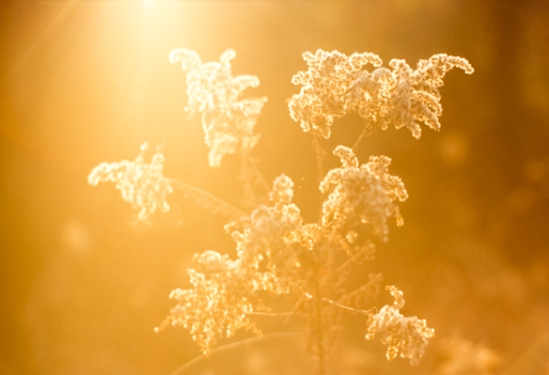 Warm Backlight, North Tract, Patuxent Research Center, Maryland,