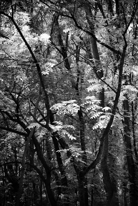 Locust, Washington County Regional Park, Hagerstown, Maryland, J