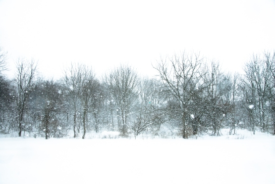 Snowstorm, Hunter Hill, Hagerstown, Maryland, January 23, 2016