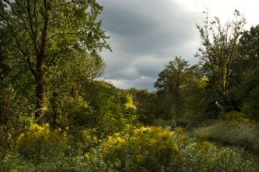 Fieldwork, Hagerstown, Maryland, September 29, 2009