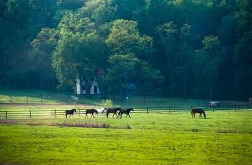 Bascule Farm, Spring, 2001
