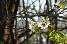 Along the Gravel Path, Hunter Hill, Hagerstown, Maryland, April