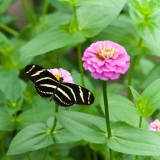 Butterfly Exhibit, Brookside Gardens, Silver Spring, Maryland, M