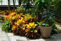 Conservatory Interior, Brookside Gardens, Silver Spring, Marylan